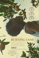 Burning Cane 2019 İzle