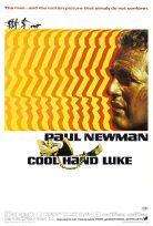 Cool Hand Luke 1967 İzle